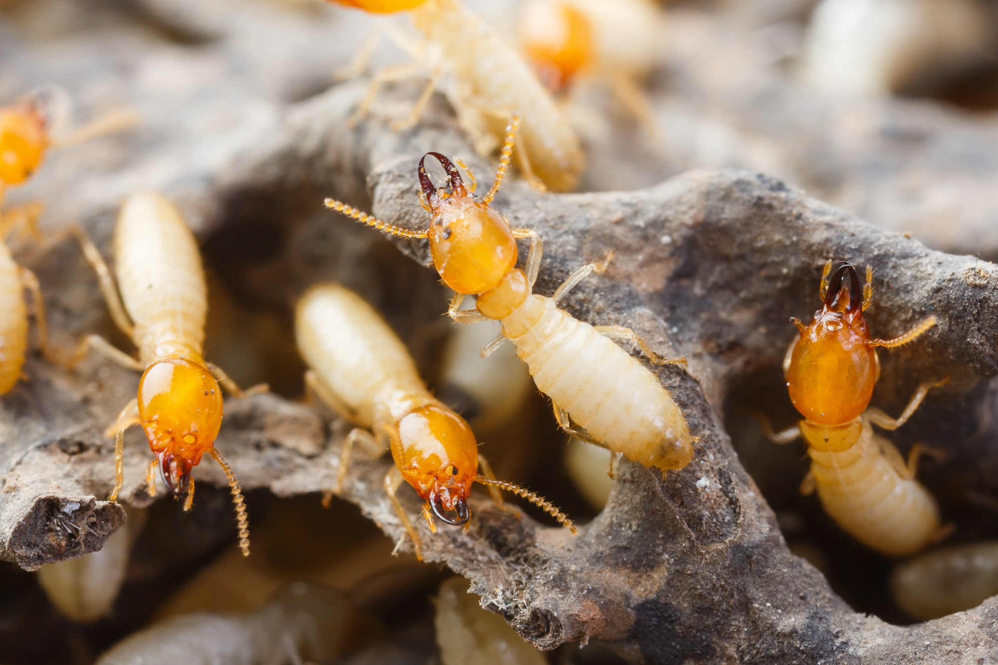 We Specialise in Combined Building & Pest Inspections